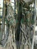 苏州仿真树上色中